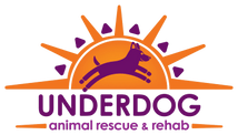 Underdog Rescue and Rehab