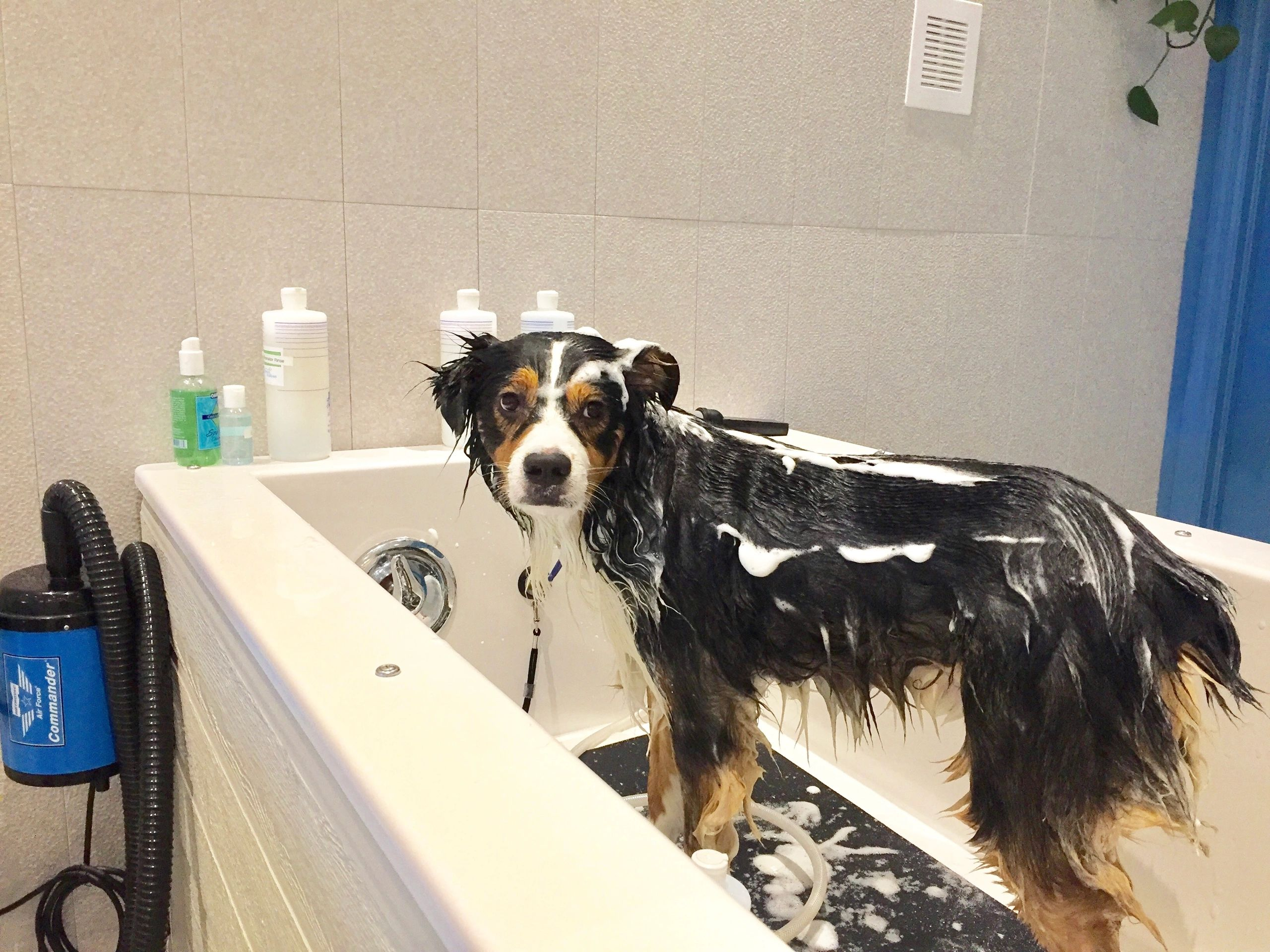 Barks bubbles diy dog grooming self service dog wash barks barks bubbles diy dog grooming self service dog wash barks bubbles diy solutioingenieria Images