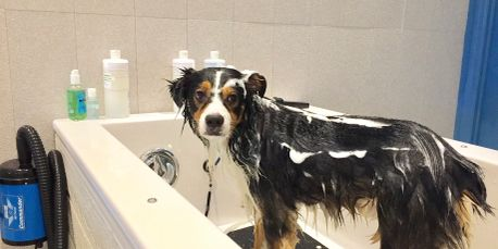 Barks bubbles diy dog grooming self service dog wash barks full service dog wash we do all the dirty work solutioingenieria Images