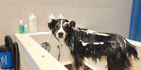 Barks bubbles diy dog grooming self service dog wash barks full service dog wash we do all the dirty work solutioingenieria Gallery