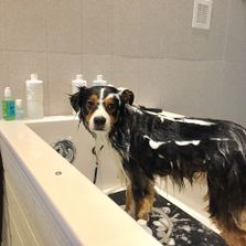 Services barks bubbles diy full service dog wash how it works solutioingenieria Choice Image