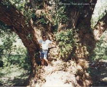 """Co-Owner and founder, Kevin Jones stands on the trunk of the World Record Champion Cottonwood tree."
