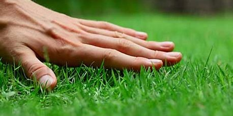 Simply put healthy turf grass needs proper aerating, water, sunshine, quality nutrients and weed