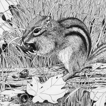 Chipmunk Pen and Ink Drawing
