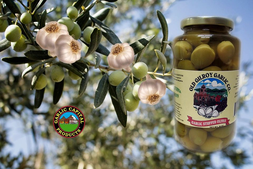 Olive branch with garlic bulbs added and a glass jar of Old Gilroy Garlic Co. Garlic Stuffed Olives