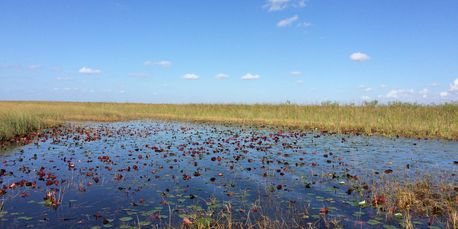 JetsetPrivate Air Everglades Wilderness Adventure. Fly private for a day in  Everglades. Experiences