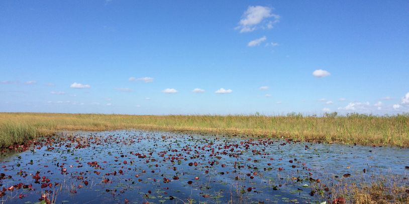 JetsetPrivate Air Everglades Wilderness Adventure. Charter flights for a day in  Everglades.
