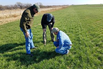Chisholm Fescue User Guide
