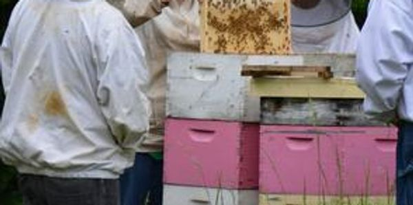 Each year we offer classes for new beekeepers to the experienced beekeeper.