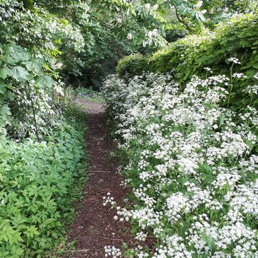 cow parsley woodland garden path hedge spring flowers