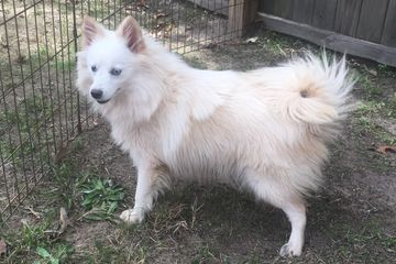 Female born 2-20-17 utd on shots and worming blue eyes potty trained 478-825-0846