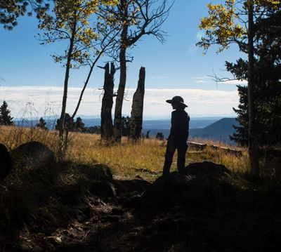 Photo in the San Francisco Peaks