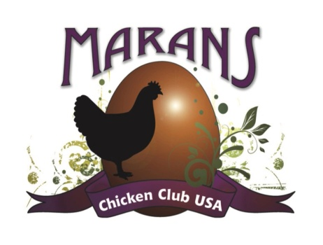 Marans Chicken Club, USA