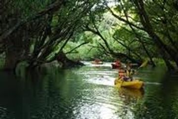 Mangrove tour by kayak