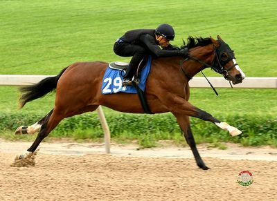 Tapizar, Two Year old in training sales, Yearling, Keeneland Sales, consignment. Secret Czar sold by