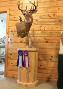 Custom taxidermy bases and pedestals Kalispell Montana blue pine, walnut, oak, alder, cherry