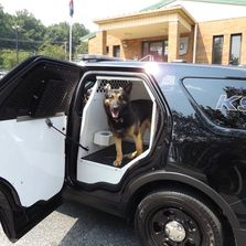 Newberry Township Police Department K-9 Tazer