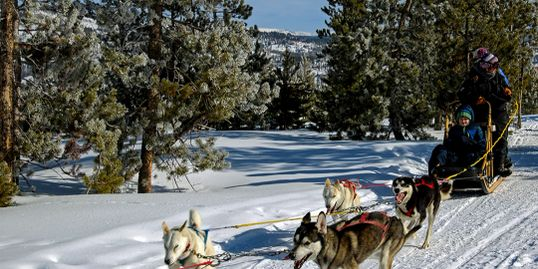 Dog sled Rides at Snow Mountain Ranch
