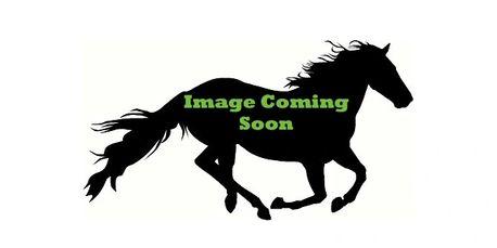 Meet our Horses/Ponies | Asti Equestrian