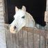 Asti Equestrian