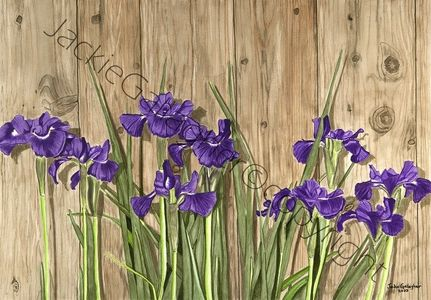 """Standing Tall"" – Siberian Irises, Watercolour on Illustration Board, Framed 23⅝"" x 18"", For Sale"