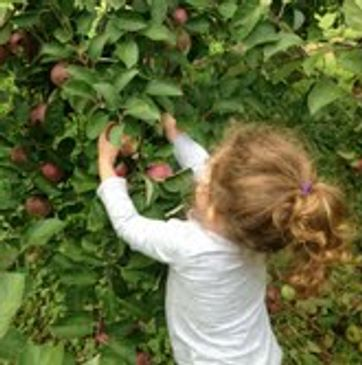 Our granddaughter Madison helping us pick Apples.