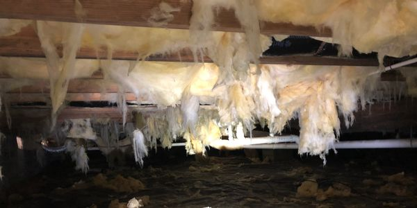moisture in crawl space. insulation hanging down.
