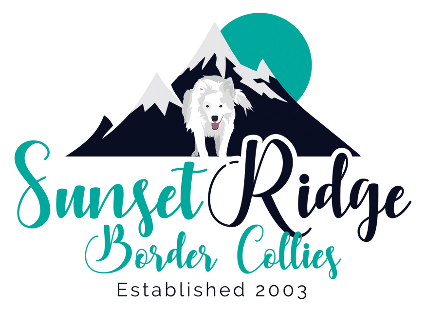 Sunset Ridge Border Collies