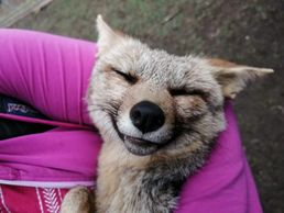 Fox in girl's arms appears to be smiling.