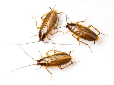 Roach extermination: 1/2 price retreats for 6 Months.