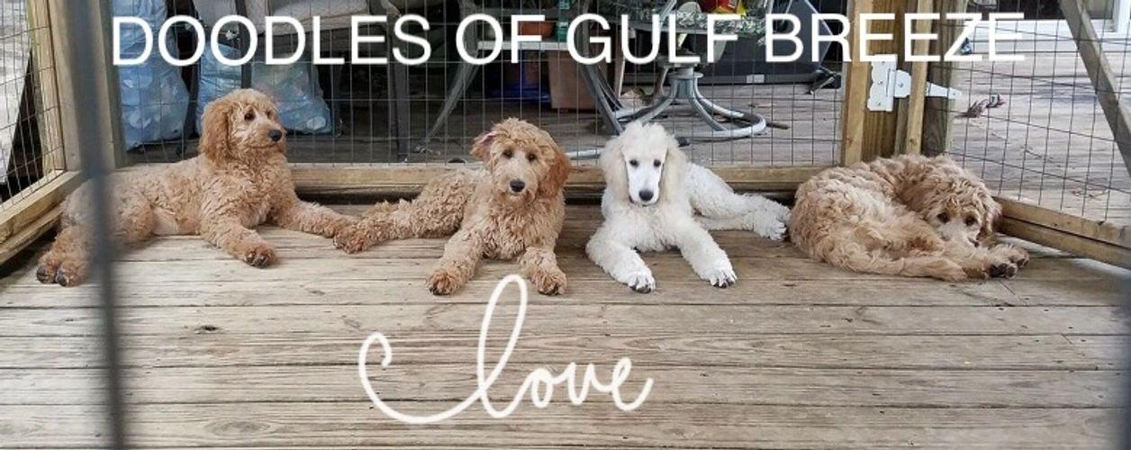 Doodles of Gulf Breeze