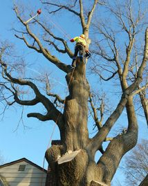 Tree removal Tree pruneing crane removal  tree trimming storm damage Brush removal tree asement.