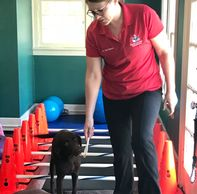 K9 Rehab, Dr.Lisa Mason, Vet Rehabilitation,Dog Chiropractic, Shockwave, Laser Therapy,Hydrotherapy
