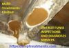DRY ROT FUNGI INSPECTION SERVICES