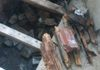 timber floor joists affected with wet rot fungi