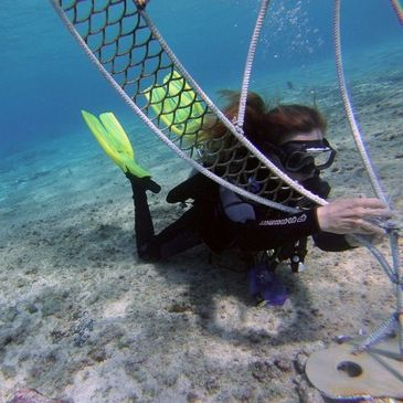 Diver transplanting coral on electrified reef regeneration art structure