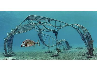 Zoe & Trunkfish artificial reef Photographic Image for sale