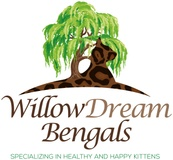 WILLOW DREAM BENGALS