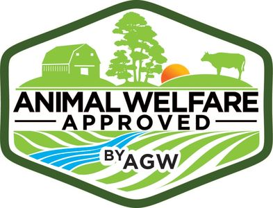 Texas Iberico pigs are Animal Welfare Approved