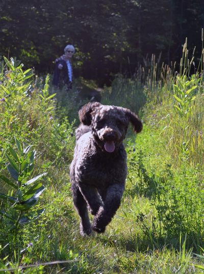 Tessa races through a summer meadow.