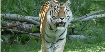 Thrigby Wildlife Park is a conservation zoo with tigers, reptiles, red pandas, small mammals and bir