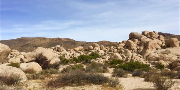Giant heart shaped boulder at Joshua Tree National Park, White Tank Campground.  Photo by Kristi.