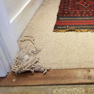 Beige loop pile carpet has been scratched and pulled up around a doorframe