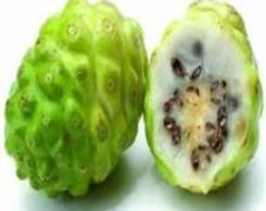 Noni Juice Chiang Mai Thailand. 100% raw noni juice at Body and Mind Healing. Detox Chiang Mai