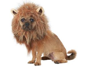 Fuzzy lion maine headpiece for dogs or other pets.