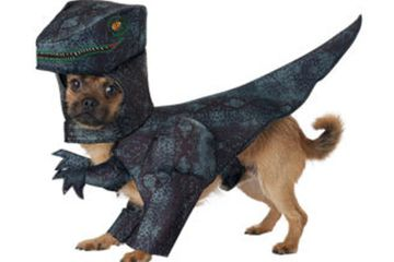 Black and dark green dinosaur raptor costume for dogs, with raptor head hood, clawed hands, and tail