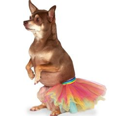 Rainbow layered tutu for dogs or other pets with ribbon to tie around waist