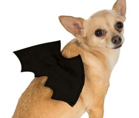 small black bat wings with elastic straps for dogs or other pets.