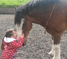 Ollie our Shire with 3 yr old Ashleigh