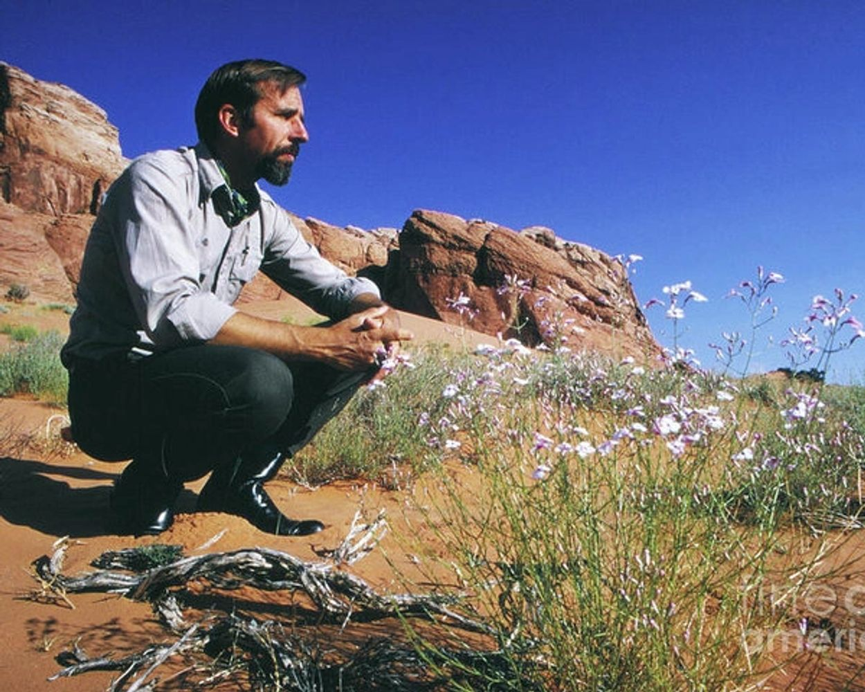 Edward Paul Abbey looks across the desert surrounded by rock formations, driftwood, and wildflowers.